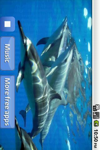 Скачать песню дельфина