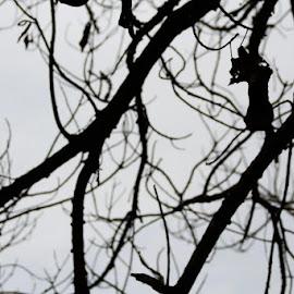 [e1d mpun..] by Irwandy Zeman - Abstract Patterns