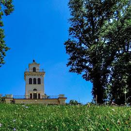 Vantage Point by Bojan Bilas - City,  Street & Park  City Parks ( tree, park, grass, lookout, meadow, vantage point,  )