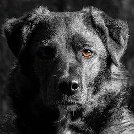 Nemi by Tor Boine - Animals - Dogs Portraits ( nemi, hund, dog, dyr, animal,  )