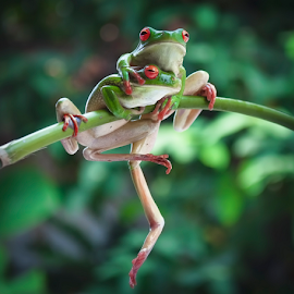 Dont Worry my love ... im with you * HUG* by Robert Cinega - Animals Amphibians