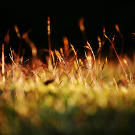 UNITED WE GLOW !!!! by Rajesh Kannan Rajendran - Nature Up Close Leaves & Grasses