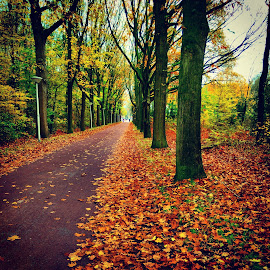by Manickavasagam Shanmugam Annamalai - Instagram & Mobile Android ( ride, bike, novemeber, nature, autumn, holland, street, trees, leaves, path, landscape )