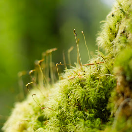 by Rebecca Centers - Nature Up Close Other plants ( macro, green, moss, forest )