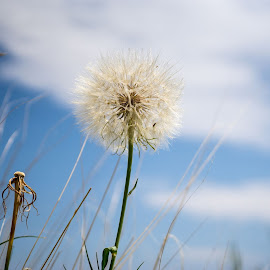 untitled-107.jpg by Mitch McCann - Nature Up Close Other plants