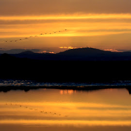 Sunset Serenity by Brian Blood - Landscapes Sunsets & Sunrises ( folsom lake, waterscape, sunset, lake, geese,  )