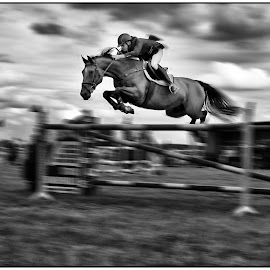 Almost Flying by Etienne Chalmet - Animals Horses ( paard, sprong,  )