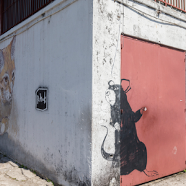 CAT AND MOUSE by Frank Photography - City,  Street & Park  Neighborhoods ( mouse, cat, painted, corner, funny, house, angle )