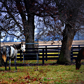 Grazing by Tricia Scott - Animals Horses ( farm, pasture, grazing, horses, grass, foliage, landscape, leaves )