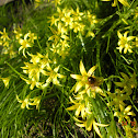 Yellow-Star-on-Bethlehem