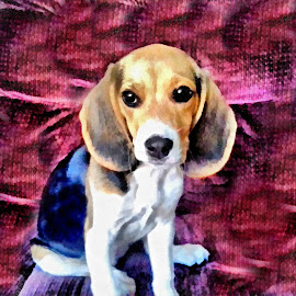 New Puppy by Scott Bennett - Painting All Painting