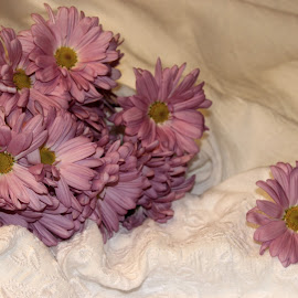Pink Daisies by Christie Henderson - Novices Only Flowers & Plants