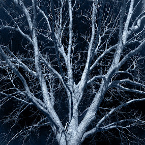 Old Blue Tree by Colin Toone - Instagram & Mobile Android (  )