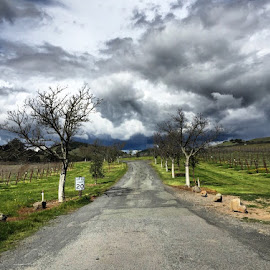 Napa Vineyard by Ashley Madich - Landscapes Cloud Formations ( leading lines, stormy weather, california, cloud formation, napa )