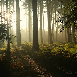 Morning01 by Molly-Jane Bowen - Landscapes Forests