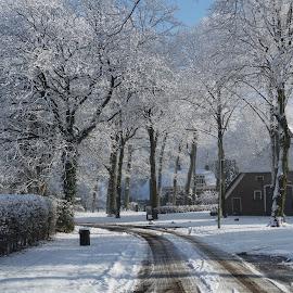 Winter Westenesch Netherlands  by Gert de Vos - Landscapes Weather