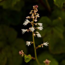 by Claudel Lamoureux-Duquette - Novices Only Flowers & Plants ( montreal, autumn, simple, botanical garden, flower )