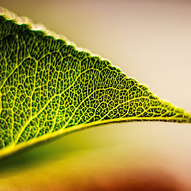 Macro leaf by Denise Johnson - Nature Up Close Leaves & Grasses ( macro, detail, green, leaf )