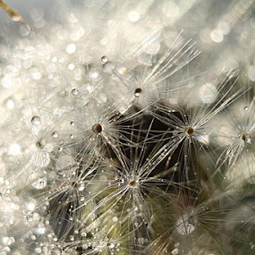 by Sonja Cvorovic - Nature Up Close Other plants