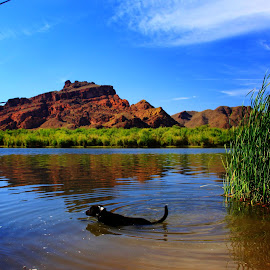 Red Mountain  by Deb Bulger - Landscapes Mountains & Hills ( reflection, dogs, waterscape, scenic, red mountain, landscape )