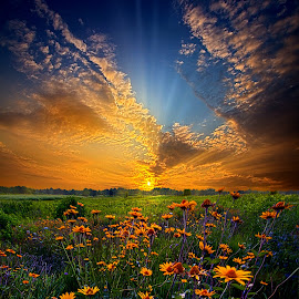 Daisy Dream by Phil Koch - Landscapes Prairies, Meadows & Fields ( wisconsin, vertical, daisy, yellow, leaves, phil koch, spring, sun, photography, sky, tree, nature, autumn, horizons, flower, office, clouds, orange, park, green, twilight, agriculture, daisies, horizon, scenic, morning, portrait, shadows, wild flowers, field, red, blue, serene, sunset, fall, meadow, summer, trees, sunrise, landscapes, floral, Hope, , orange. color )