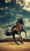 Screenshot of 500 HD Amazing Horse Pictures