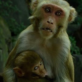 Protective Mom by Arnab Bhattacharyya - Animals Other