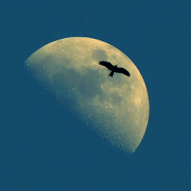 Where the Mind is without Fear by Abhishek Basak - Animals Birds ( abstract, bird, moon, sky, nature )
