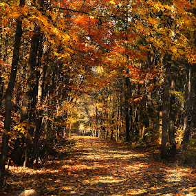 Enchanted Path by Corinne Noon - Landscapes Forests ( autumn, path, forest, landscape )