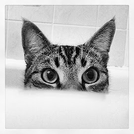 This is what I find in the bathtub when I go to have a shower in the morning.... by Erika Cardona - Instagram & Mobile iPhone