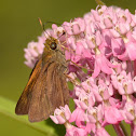 Tawny-edged Skipper