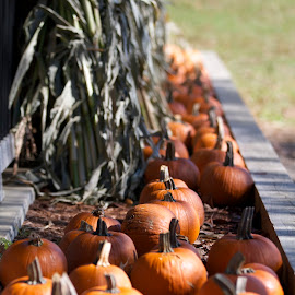 October is wonderful by John Mahaney - Food & Drink Fruits & Vegetables ( #canon )