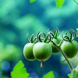 by Syamsul Rustam - Nature Up Close Gardens & Produce