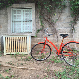 Bike by Carlos Co - Transportation Bicycles