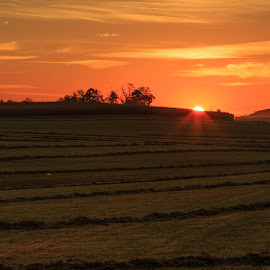 Breaking Dawn over Freshly Cut Fields by Troy Snider - Landscapes Mountains & Hills ( orange, tress, grass, bright, farming, sun, field, farm, dawn, sky, hay, sunstar, windrows )
