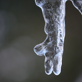 Icy Hand by Crys Griffin - Nature Up Close Water ( water, ice, frozen )