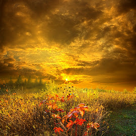Shine Your Light for the World to See by Phil Koch - Landscapes Prairies, Meadows & Fields ( vertical, fine art, yellow, travel, leaves, love, sky, nature, tree, autumn, trail, light, flower, orange, twilight, horizon, dawn, outdoors, trees, wild   flowers, floral, wisconsin, ray, landscape, phil koch, sun, photography, blue sky, path, horizons, office, clouds, park, green, back light, scenic, morning, ferns, shadows, field, red, color, blue, sunset, fall, meadow, landscapephotography, beam, sunrise, landscapes, hike, mist )