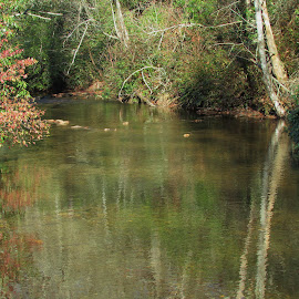 Reflections In The Stream by Terry Linton - Nature Up Close Trees & Bushes ( Earth, Light, Landscapes, Views )