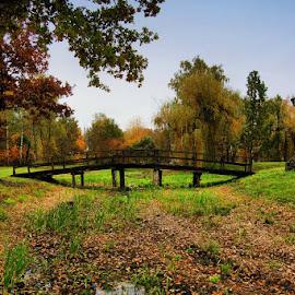 old oak by Stjepan Valjak - Landscapes Prairies, Meadows & Fields