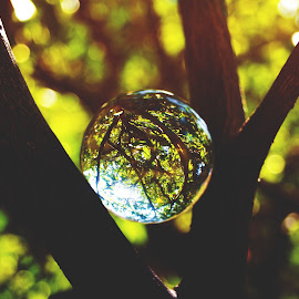 by Aja Crayton - Artistic Objects Glass ( nature, glass, trees, light, bokeh )