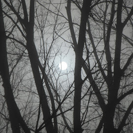 Sun and Trees in Fog by Kristina  Dorsett - Nature Up Close Trees & Bushes ( fog, trees, nature up close, landscape, sun )