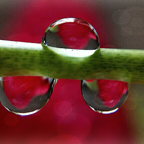 **as best as i can... by Rayna Brilliantsyah - Nature Up Close Natural Waterdrops