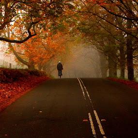 Lonely roads by Soubir Paul - City,  Street & Park  Street Scenes ( cycle, fall, trees, road, soubir,  )
