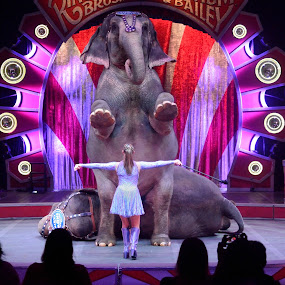 The Circus Elephants Perform by Stephen Beatty - News & Events Entertainment