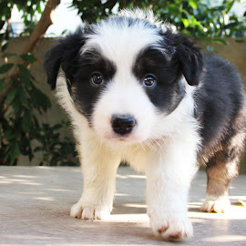by Yogev Boker - Animals - Dogs Puppies