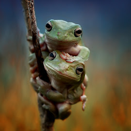 A Friend by Yusri Harisandi - Animals Amphibians