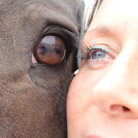 Human and Horse by Fraser Allsopp - Animals Horses ( horse, eye,  )