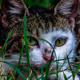 mačka.jpg