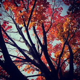 Nature's beauty #fallcolors by Michelle Cain - Instagram & Mobile Android