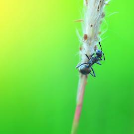 by Lulus Andika - Animals Amphibians ( lulusandika, madura, bengkohphoto, maduraforphotography )